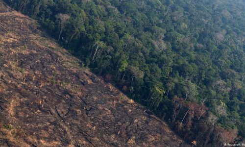 DEUTSCHE WELLE – Deforestación en la Amazonía brasileña saltó un 222 % en agosto