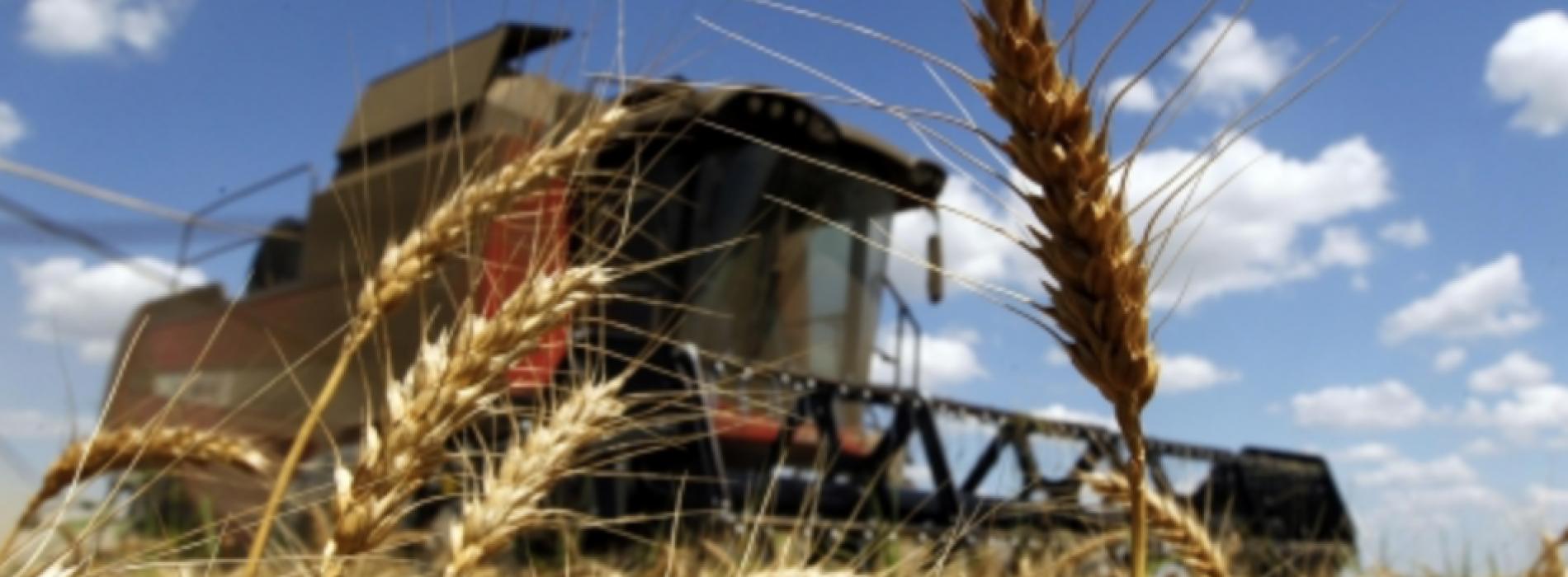 Uruguay firmó iniciativa conjunta en OMC para garantizar funcionamiento de cadena alimentaria